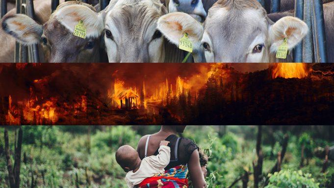 Pecuária, desastres ambientais, epidemias e o trabalho das mulheres
